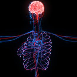 Nervous System & Brain Function